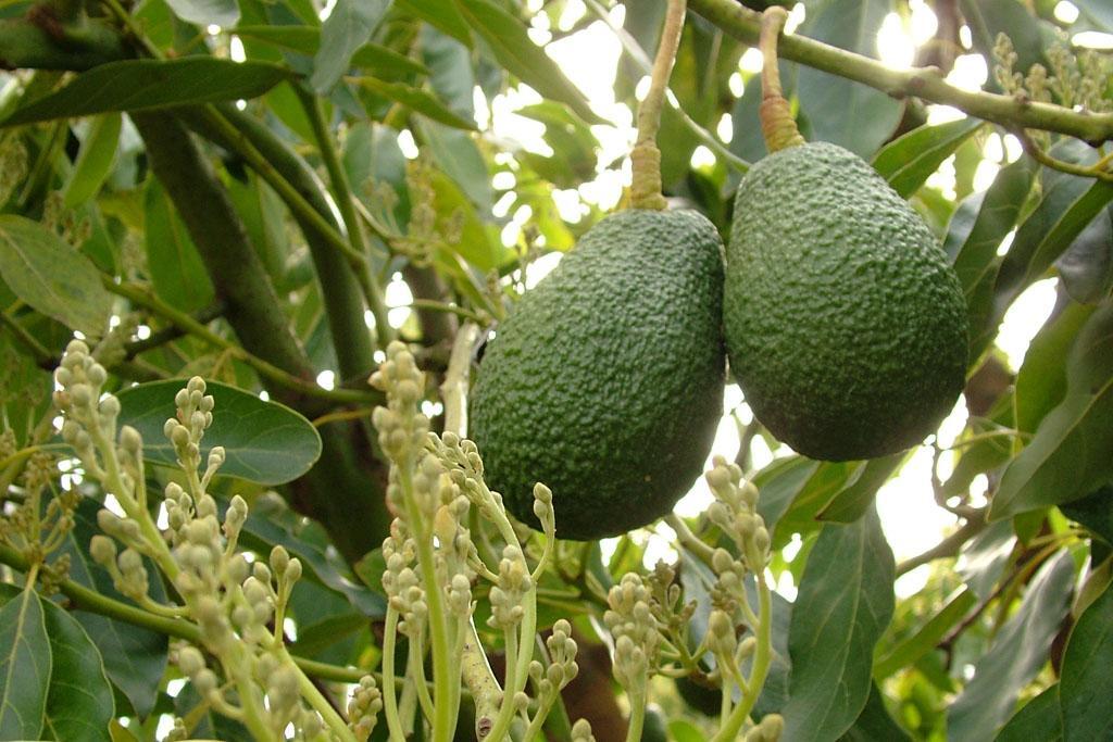 South Africa – The Fruit Farm Group
