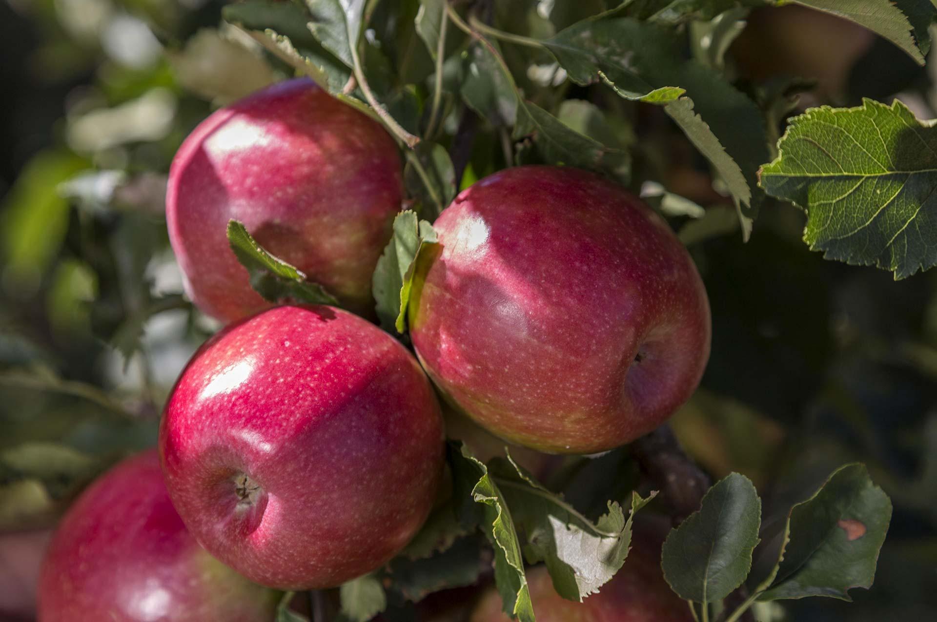 Appels farming